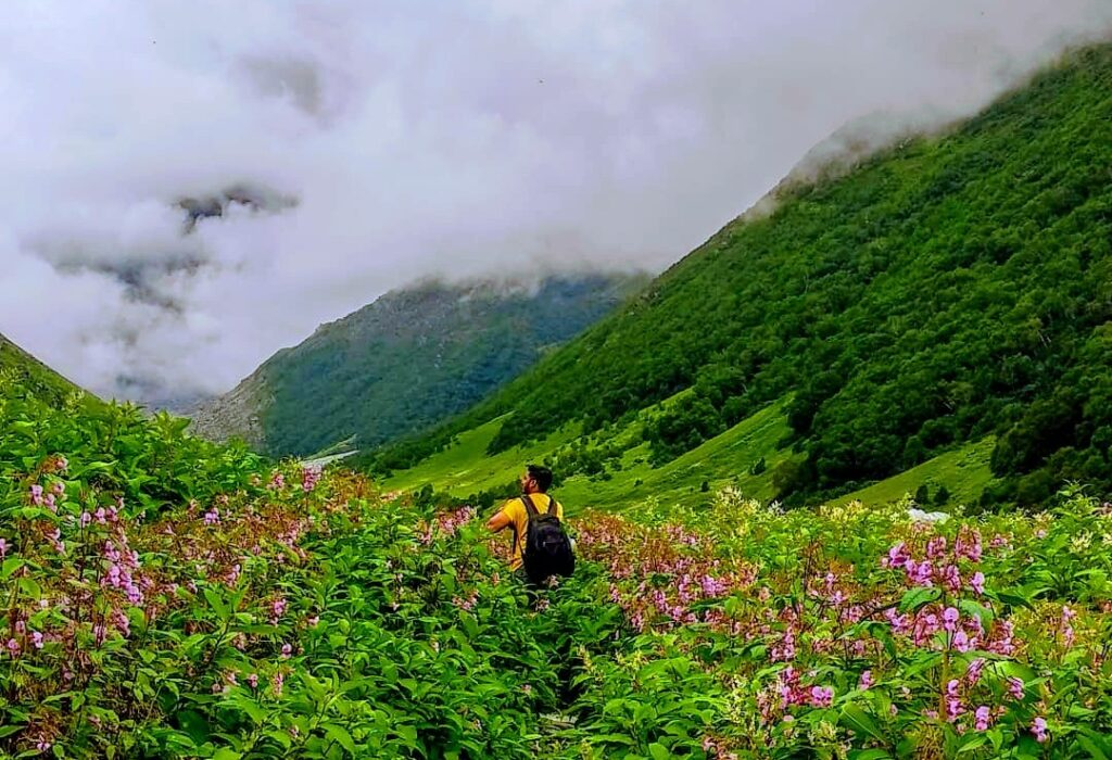The Valley of flowers is one of the few Himalayan treks