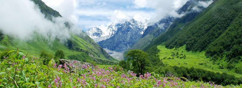 ghangaria valley of flowers trek