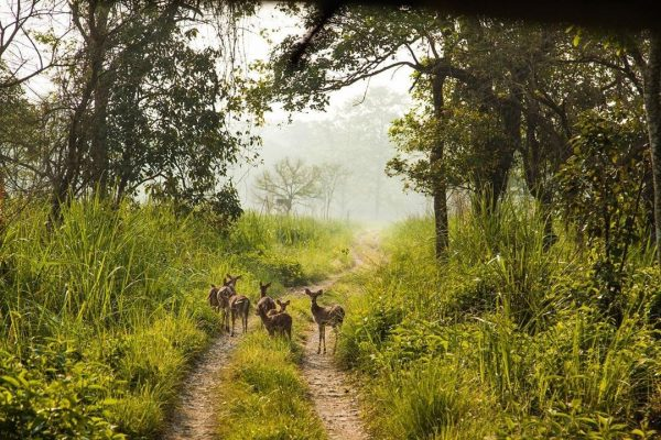 Chitwan National Park, places to visit in nepal