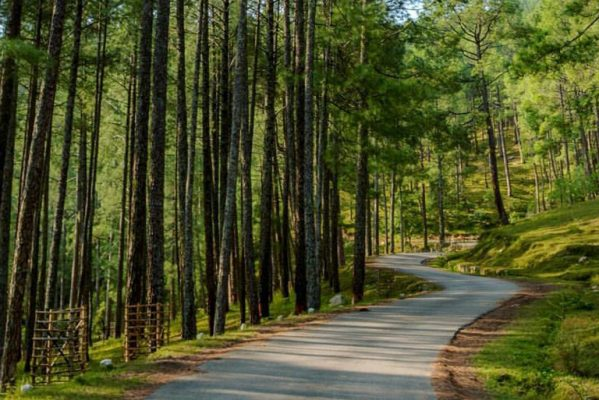 pine forest, ooty