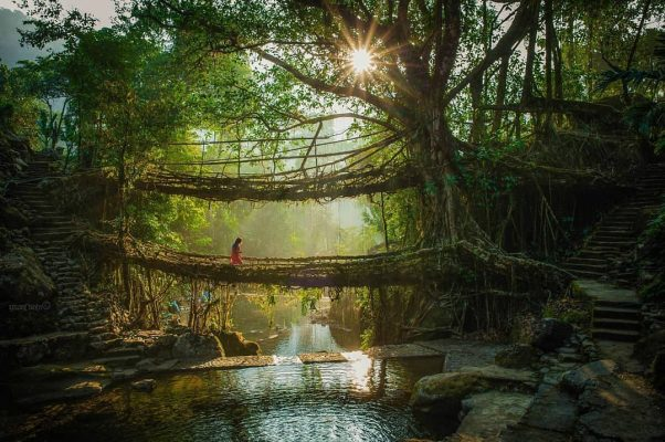 Natural Plant Bridge In Meghalaya - Meghalaya Tour Packages | Hikerwolf